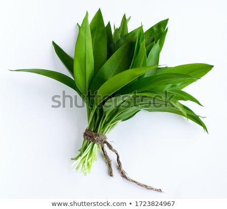 wild · knoflook · bos · natuur · blad · groene - stockfoto © joker