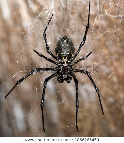 Büyük beyaz örümcek Madagaskar insan park Stok fotoğraf © artush