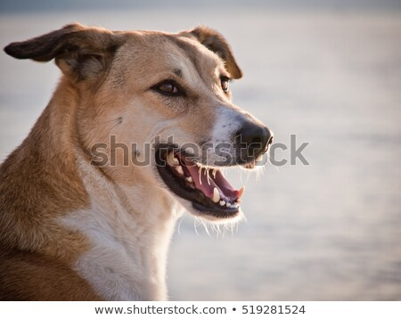 handsome mixed breed dog Stock photo © willeecole