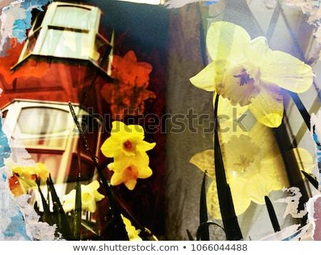 temporada · de · otoño · collage · foto · secar · follaje - foto stock © sandralise