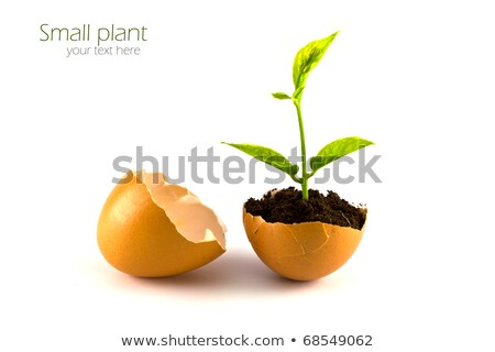 growing green plant in egg shell on white background stock photo © rufous