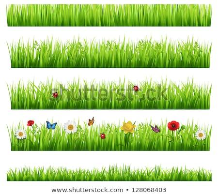 Erba confine fiore raccolta isolato gradiente Foto d'archivio © adamson
