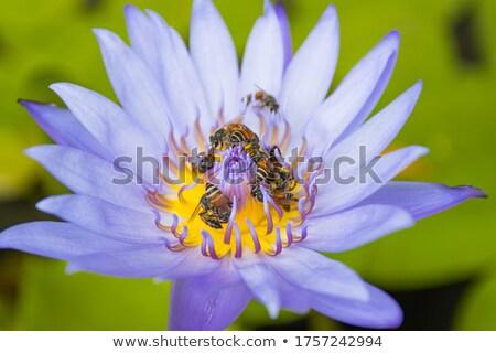 dentro · flor · rosa · branco · spiralis - foto stock © stefanoventuri