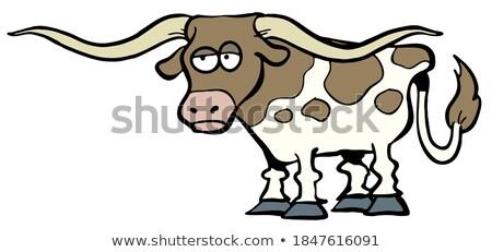 Inek kafa atış Teksas kahverengi beyaz Stok fotoğraf © eh-point