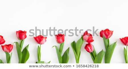Overhead view of red tulips isolated on red background.  Stock photo © Illia
