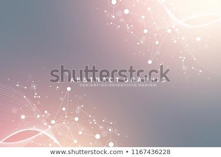 sección · transversal · diagrama · ciencia · ADN · biología · vector - foto stock © pikepicture