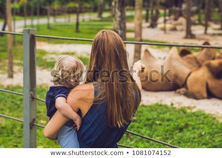 mother and son looks at the camels at the zoo stock photo © galitskaya