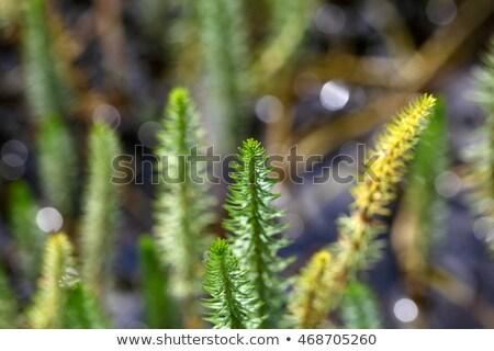 Сток-фото: хвост · водный · завода · цветок · природы · лет