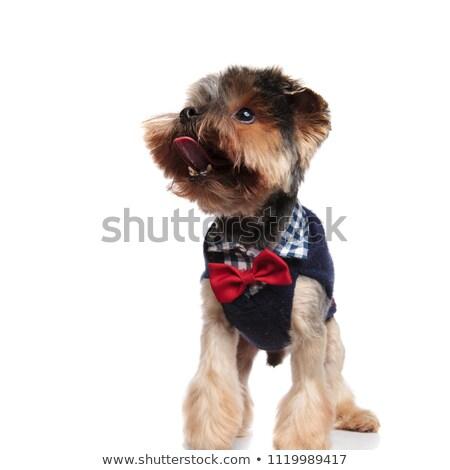 子犬 · 着用 · ルックス · サイド · かわいい - ストックフォト © feedough
