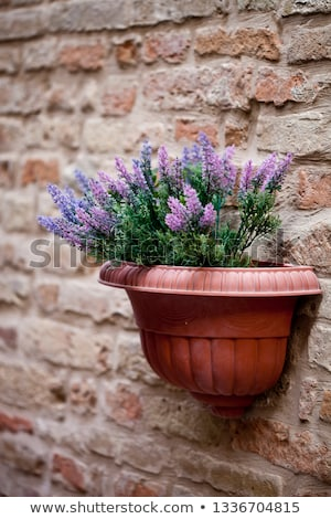 díszítő · zsálya · lila · virág · zöld · tavasz · kert - stock fotó © marylooo