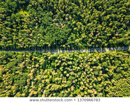 Aerial view of the road through the deciduous forest is a fine summer day. Natural background Stock photo © artjazz