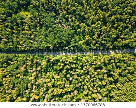Strada decidue foresta estate giorno Foto d'archivio © artjazz