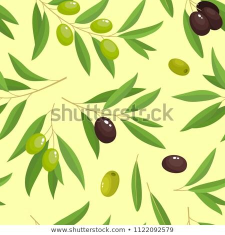 Groene zwarte olijven vector ontwerp vruchten achtergrond Stockfoto © djdarkflower