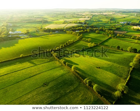 Beautiful Irish countryside with emerald green fields and meadow Stock photo © doomko