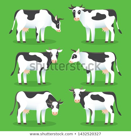 Farm animals cows isolated on green background. Set of white and black cows in flat style, for logo  Stock photo © MarySan