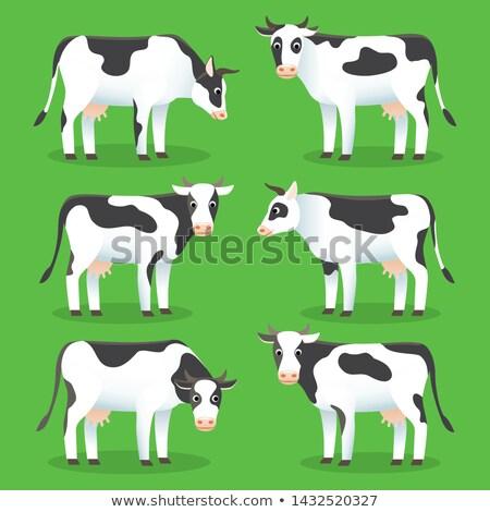 家畜 · 白 · 実例 · 幸せ · 芸術 · 牛 - ストックフォト © marysan