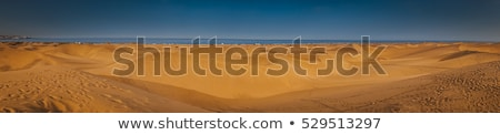 砂の 風景 リザーブ 砂漠 緑の木 自然 ストックフォト © vapi