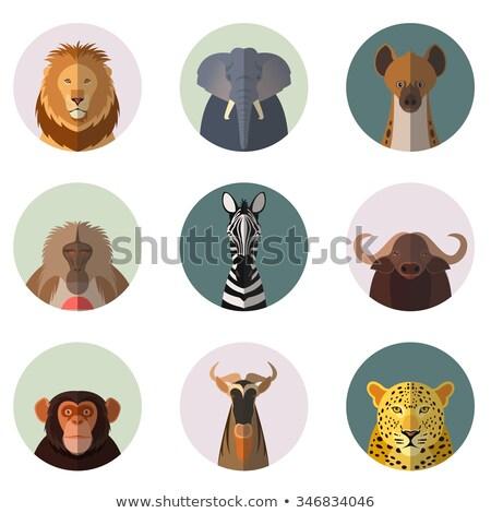 elephant cartoon icon in flat design stock photo © robuart