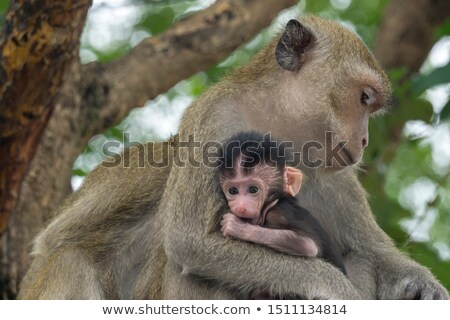 обезьяны · каменные · Blue · Sky · Таиланд · ребенка · глазах - Сток-фото © vapi