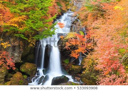 водопада осень лес Япония осень пейзаж Сток-фото © vichie81