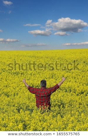 Farmer gesturing in blossoming rapeseed field Stock photo © simazoran