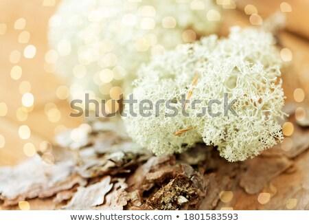 Közelkép rénszarvas moha fenyőfa ugatás természet Stock fotó © dolgachov