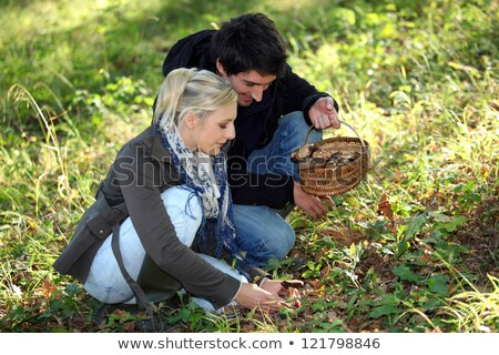 Couple picking mushrooms in a field Stock photo © photography33