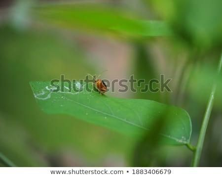 Orange ponderosa vert nature jardin printemps Photo stock © sweetcrisis