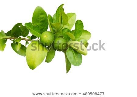 izolált · citrus · fa · erdő · természet · levél - stock fotó © haraldmuc