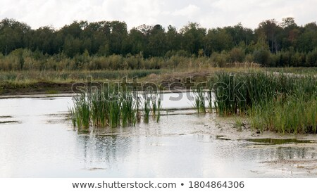 bog in forest Stock photo © MiroNovak