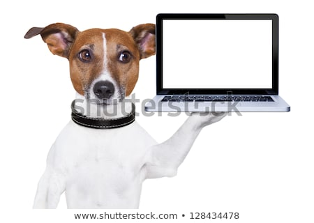 Tablet Computer Shows Touchpad Multimedia Stock photo © stuartmiles