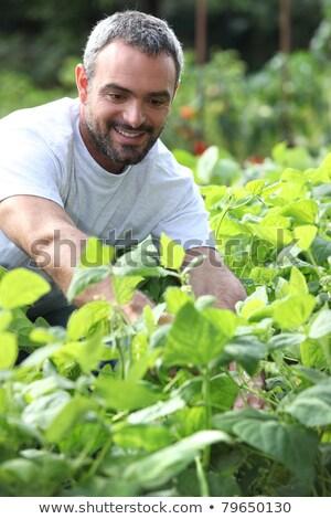 Portrait Of Man Gardening On Allotment Stock photo © HighwayStarz