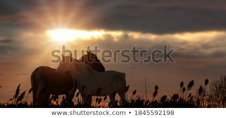Two Horses in a Pasture Stock photo © rhamm