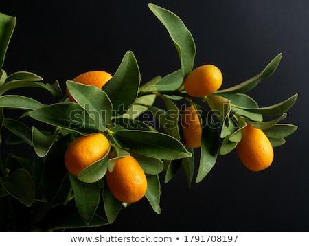 Orange Kumquat Stock photo © vladacanon