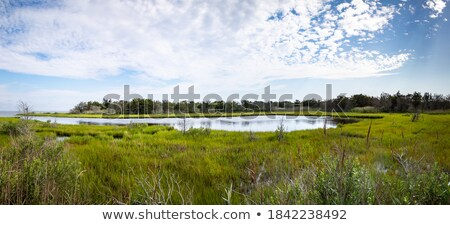Wetlands on a Barrier Island Stock photo © wildnerdpix