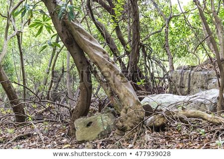 Selva Dominica naturalismo reserva Foto stock © meinzahn