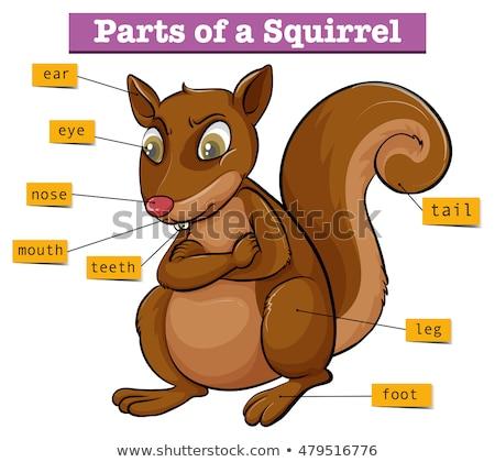 Diagram mutat különböző alkatrészek mókus illusztráció Stock fotó © bluering
