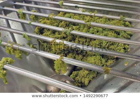 Branco uvas vinho branco suco bubbles vinho Foto stock © nailiaschwarz