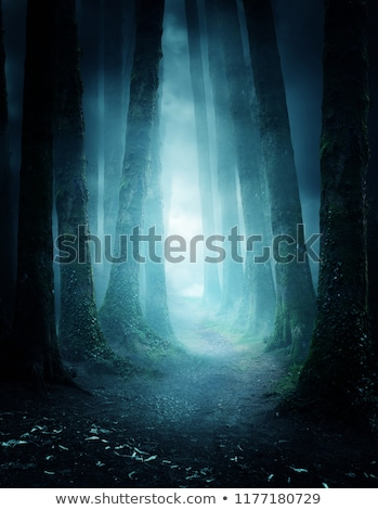 haunted forest stock photo © lightsource
