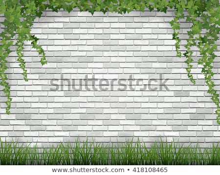 Nature Background with Ivy Leaves on Vintage Wall Stock photo © dariazu