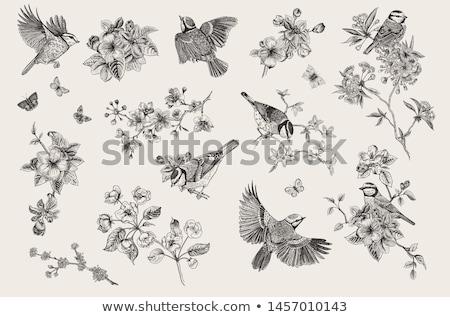 Bloemen geïsoleerd zwarte boom bladeren witte Stockfoto © Onyshchenko