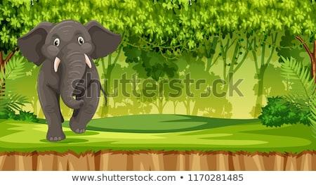 джунгли иллюстрация счастливым фон искусства завода Сток-фото © bluering