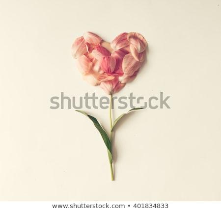 バレンタイン · フローラル · 緑 · 中心 · 手 · 図面 - ストックフォト © neirfy