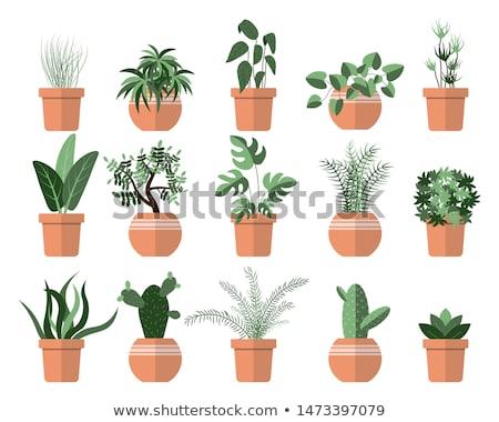 Cacto pote vetor planta isolado Foto stock © robuart