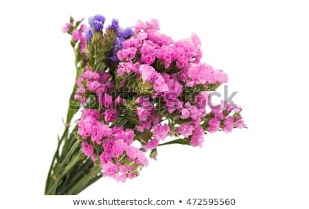 színes · virág · fehér · levél · nyár · zöld - stock fotó © furmanphoto