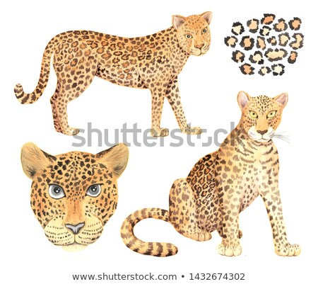Set of realistic and cartoon tiger, cheetah and leopard skin, detailed seamless patterns Stock photo © evgeny89