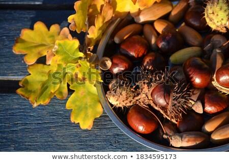 Közelkép gesztenye kagyló őszi levelek természet évszak Stock fotó © dolgachov