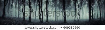 Misty scary foresta nebbia strada luce Foto d'archivio © dmitry_rukhlenko