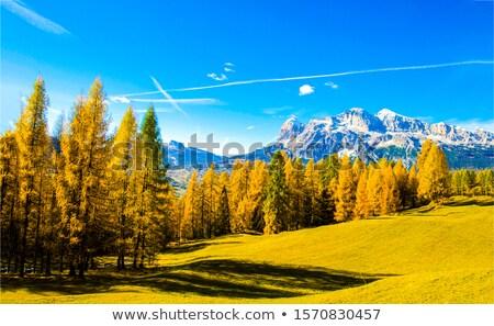Photo stock: Belle · automne · montagnes · coucher · du · soleil · Serbie · route