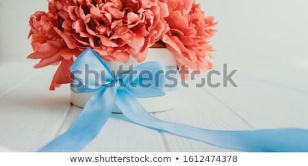 Atención selectiva blanco aumentó naturaleza belleza hojas Foto stock © happydancing